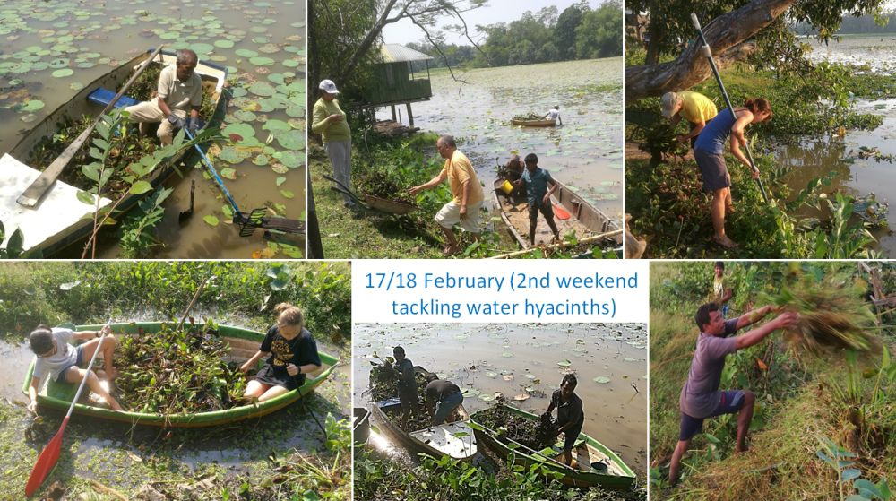 17/18 February – 2nd weekend tackling water hyacinths.